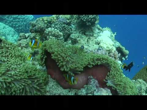 Abu bassala Mer rouge Egypte