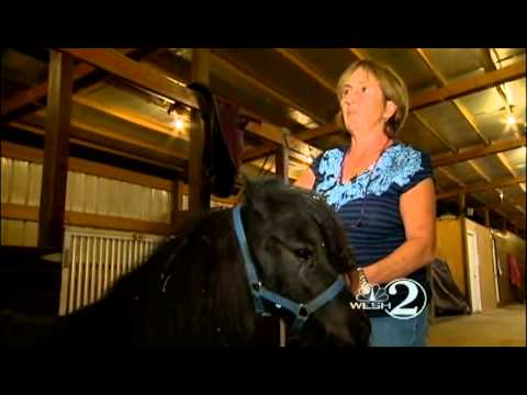 Thumbnail: Owner says man sexually abused her miniature horses