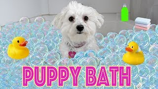 PUPPY GETS A BUBBLE BATH!!!