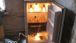 Простой домашний инкубатор своими руками для яиц.