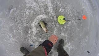 Зимняя рыбалка 2017 на разную рыбу!(Софиевское водохранилище средина января 2017 Рыбалка вертушкой поклевка амур белый виброхвост апреле..., 2017-01-15T22:40:23.000Z)