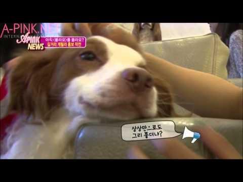 [APINKSUBS] A-Pink News Season1 Episode 11 part 1 of 2
