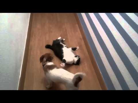 Cat & Dog (Pisi & Alma)
