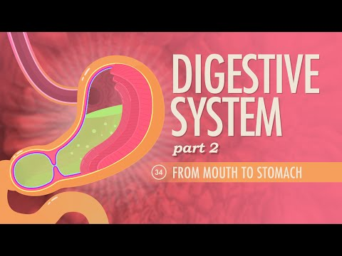Digestive System, part 2: Crash Course A&P...