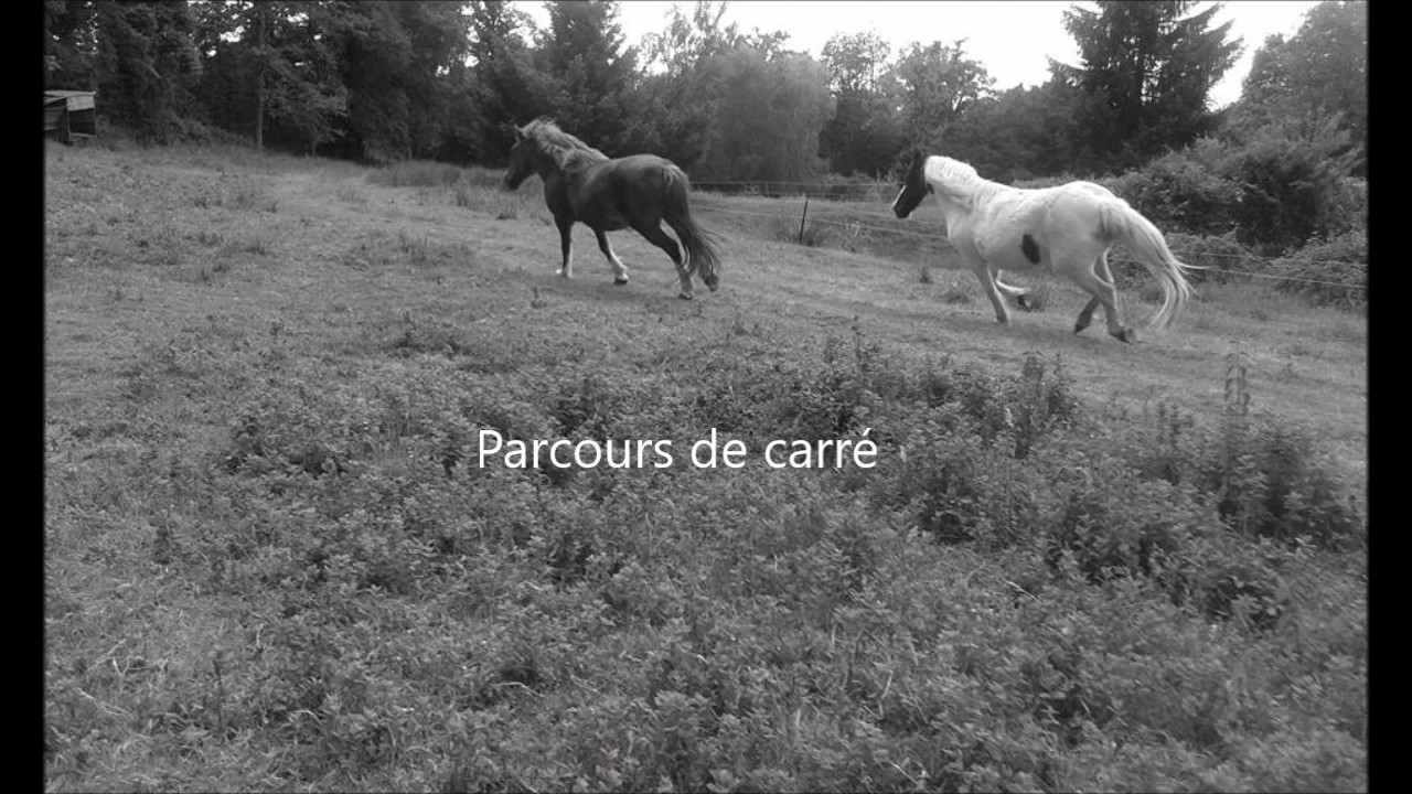 exercice de saut d'obstacle pou éviter que son cheval charge - YouTube