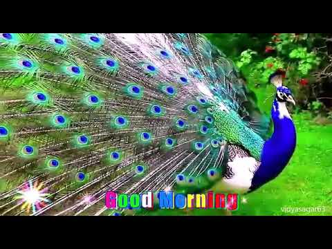 Top 100 free funny ringtones for android mobile devices funny.
