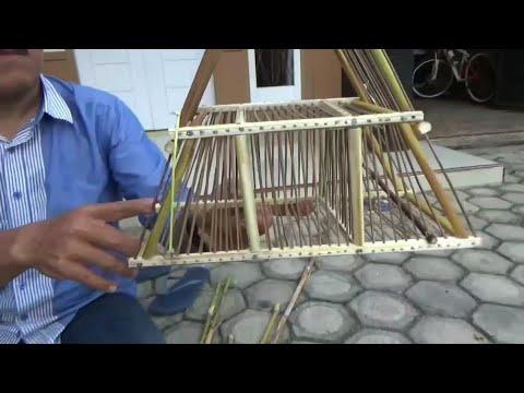 Cara membuat kandang jebakan burung dari batang rumput ...