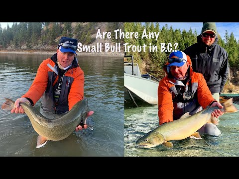 Monster B.C. Bull Trout | Phil Rowley Fly Fishing