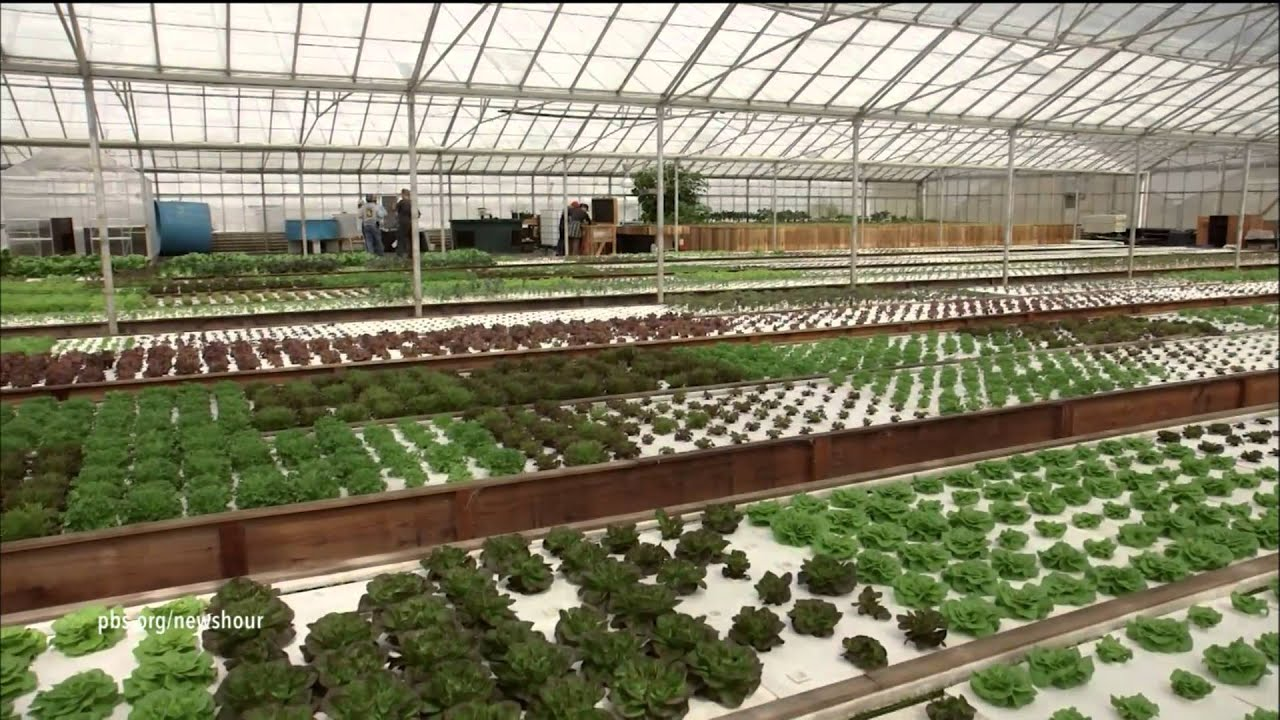Aquaponic farming saves water, but can it feed the country
