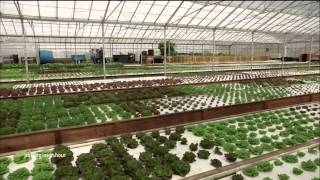 getlinkyoutube.com-Aquaponic farming saves water, but can it feed the country?