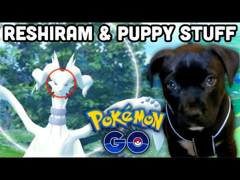 Reshiram Duo but Niantic stopped it in Pokemon GO | More puppy clips