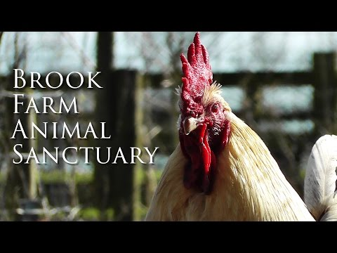Brook Farm Animal Sanctuary - Vegan Clive Richardson talks about his amazing sanctuary