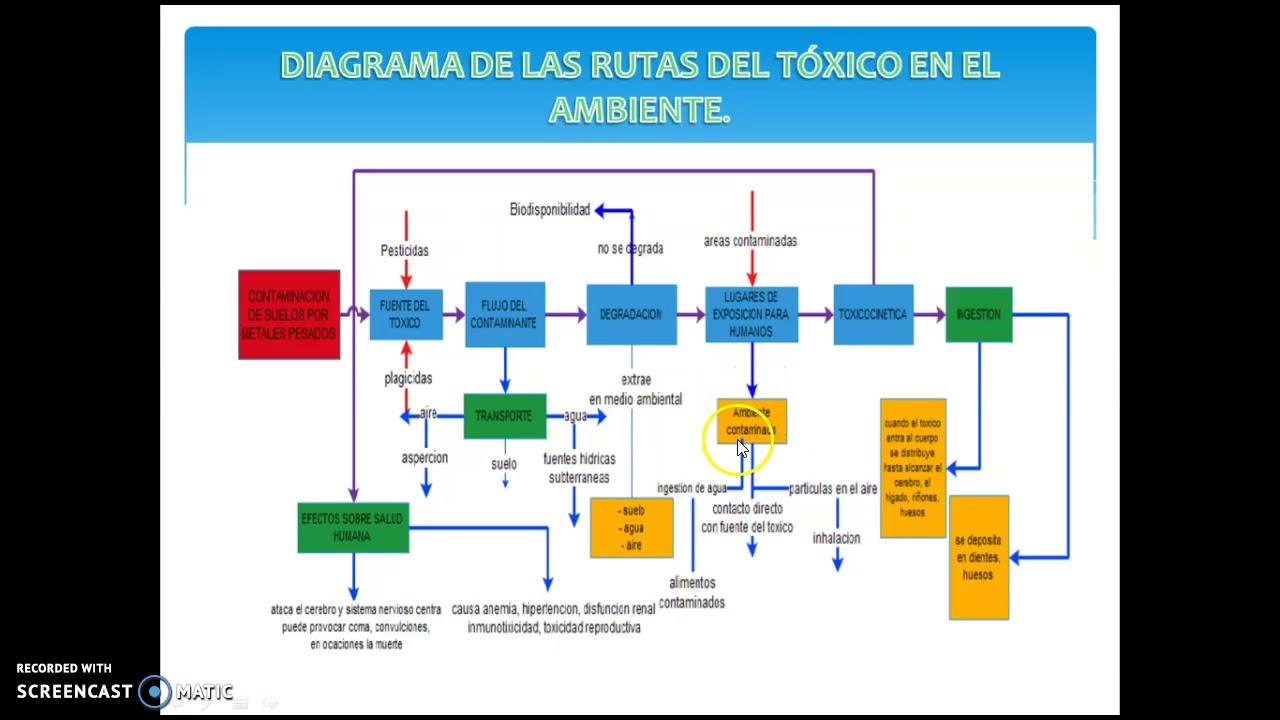 DIAGRAMA.RUTAS DEL TOXICO EN EL AMBIENTE METALES PESADOS - YouTube