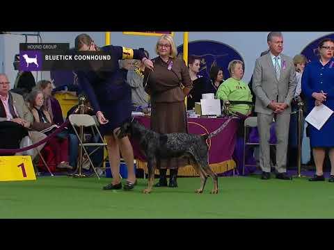 Bluetick Coonhounds | Breed Judging 2019
