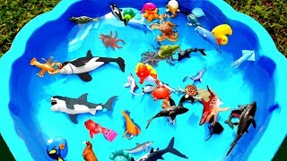 Sea Creatures For Children Learn Colors with Toys Water Green Toy Videos