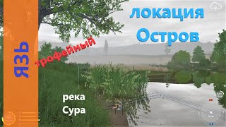 Русская рыбалка 4 река Сура Язь трофейный под дубом