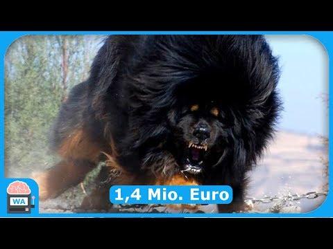 Die TEUERSTEN Hunde der WELT! (2018)