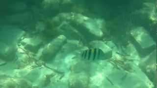 Snorkeling in Dry Tortugas National Park 3