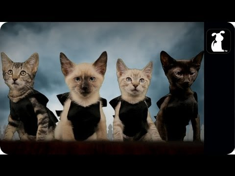 Pretty Little Liars Parody - Kitty Litter Liars