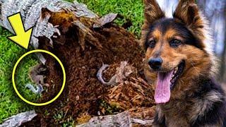 Un perro Policía Le Ladra A Un Árbol. Su Dueño Encuentra Algo Aterrador