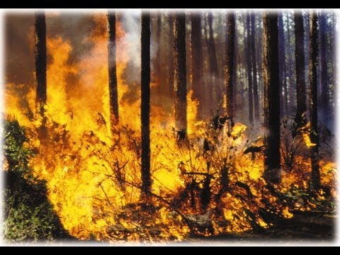Texas Wildfires 2011(Worst in TX history)