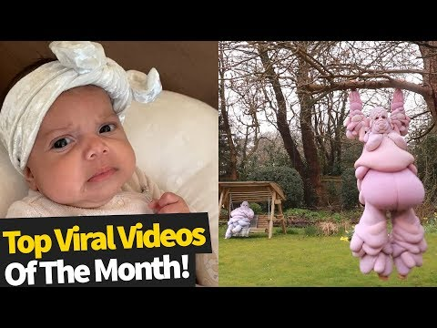 Top 80 Viral Videos Of The Month February 2020