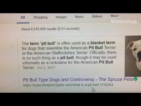 PIT BULL/PIT ISN'T A BLANKET TERM FOR BULL BREEDS