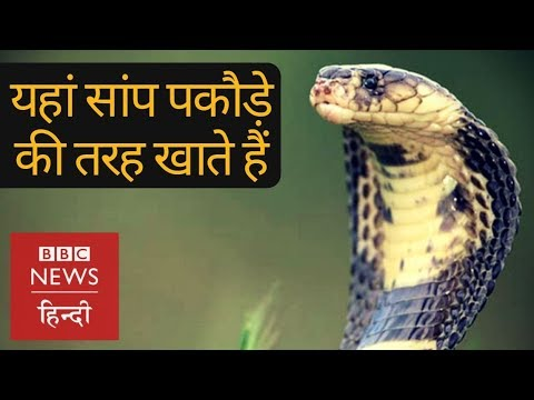 Snakes are not dangerous here, they are food! (BBC Hindi)