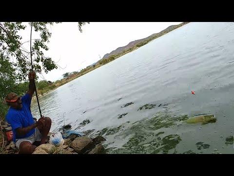 Fish hunting||Fishing For big grasscarp fish & rohu fish