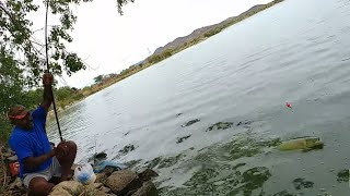 Fish hunting||Fishing For big grasscarp fish & rohu fish