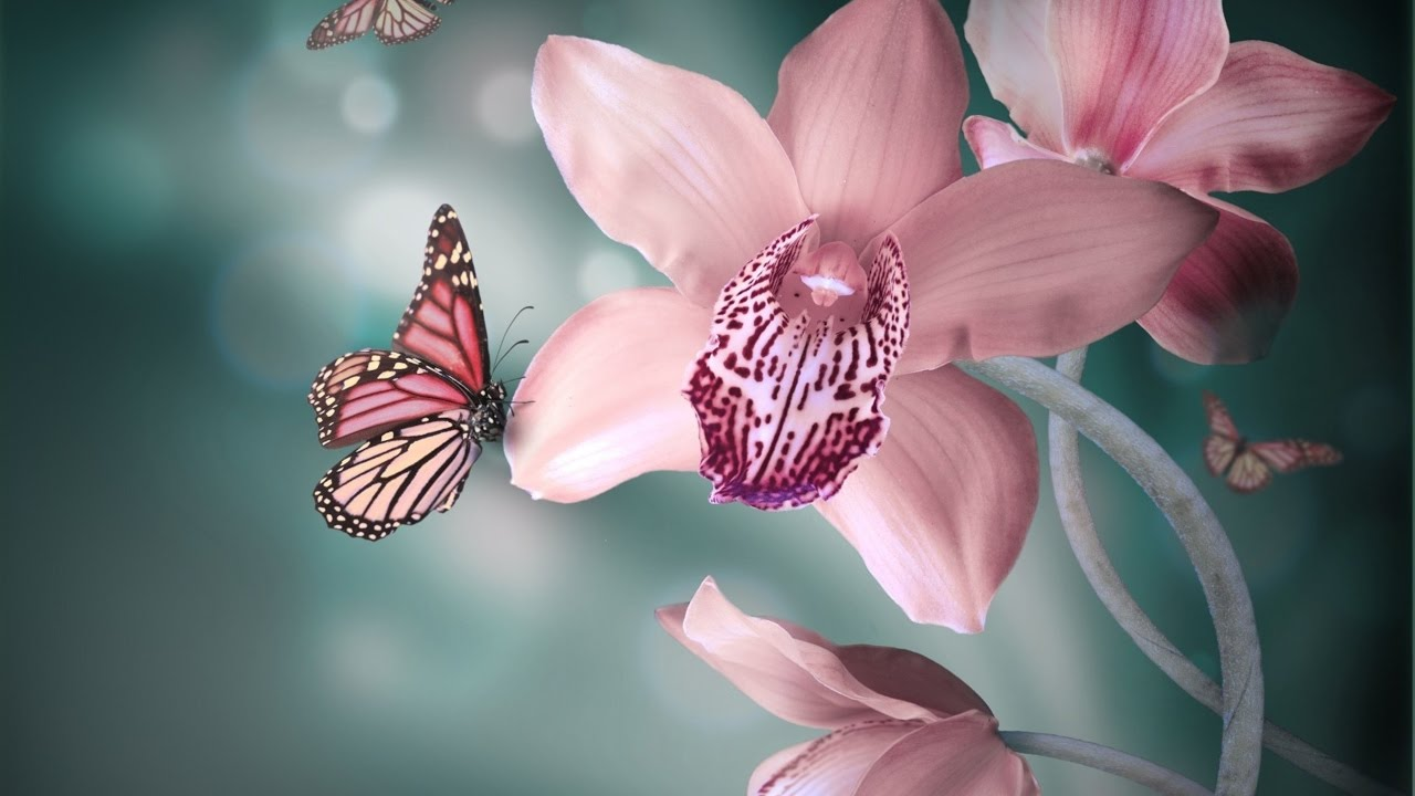 Spring Wallpaper Butterflies Youtube