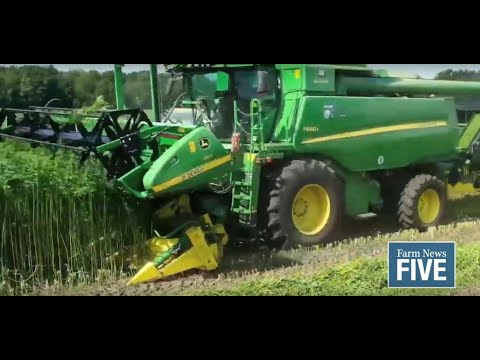Farm News Five: Michigan's industrial hemp harvest is underway