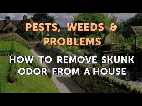 How to Remove Skunk Odor from a House