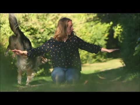Dog tricks presented by Miniature Australian Shepherd Örnie