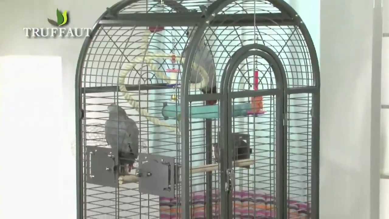 gris du gabon la cage et les jeux jardinerie truffaut. Black Bedroom Furniture Sets. Home Design Ideas