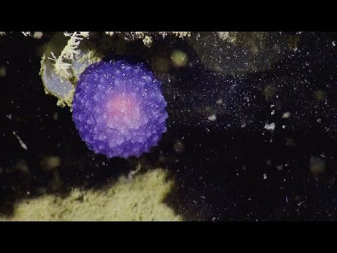 A deep-sea camera just discovered a mysterious purple blob