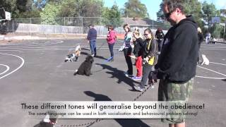 2013 Alpha Dog Training Puppy Class April 21st