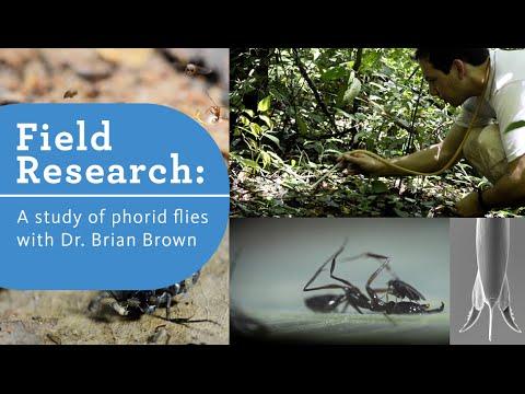 Dr. Brian Brown studies the Phorid Flies of Brazil