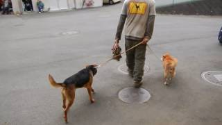 今の神奈川県動物保護センターで長い時間犬達が生きていけるのは地下収...