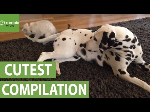 These adorable animal moments will melt your heart!