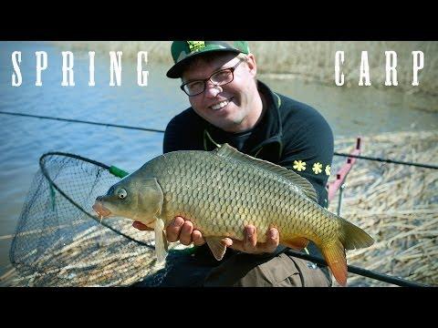 Весенний карп (Spring carp)