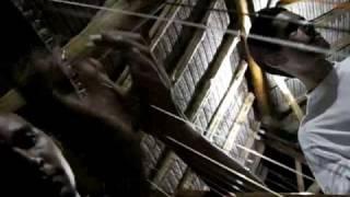 Aventuraslatoponera Musica LLanera en el Caney de Hacienda La Trinidad