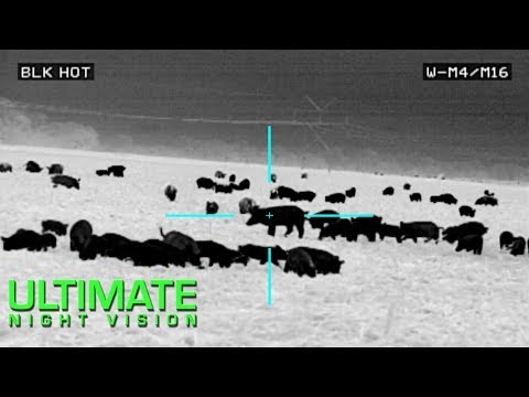 100 Hogs Down with the Insight LWTS and Pulsar Trail XP50 | Thermal Hog Hunting