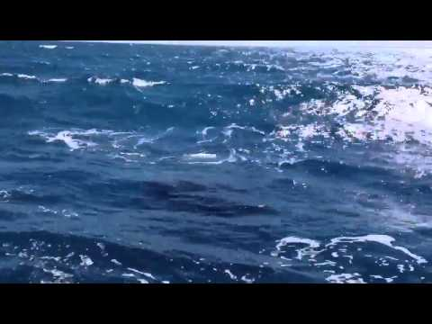 Whales in Indian Ocean by Sea Shepherds India