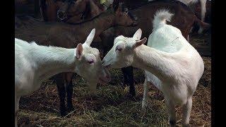 """Mooc """"Bien-être des animaux d'élevage"""" - Définition du bien-être animal"""