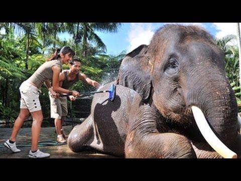 elepant-safari-park-&-lodge-taro-bali-|-elephant-safari-ride-tour