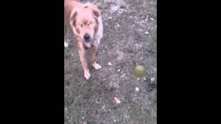 生後2ヶ月で病気のため全盲になりましたが、ボール遊びが出来る様にな...