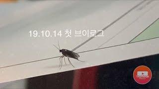 로우탠션 사업인 브이로그/ 유튜브계획과 북한산 사무실 …