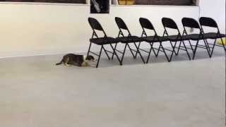 Trick Training - Army Crawl | Instinct Dog Training Nyc