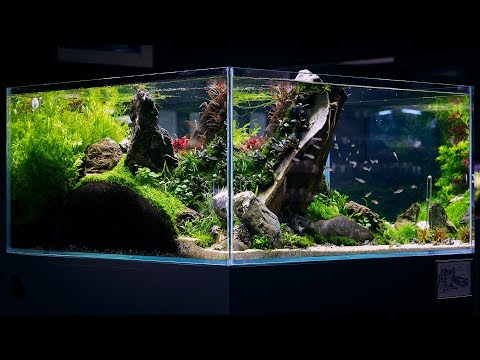THE GREAT WALL AQUASCAPE BY DAVE CHOW - 4K CINEMATIC - GREEN AQUA